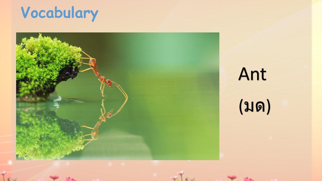 Vocabulary Ant ( มด )