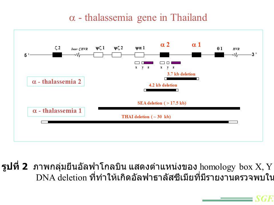 การตรวจวินิจฉัย  -Thalassemia 1 โดยเทคนิค Relative Quantitative PCR
