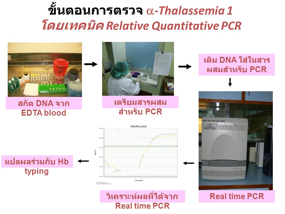 Real time PCR วิธี Hydrolysis probe (Taqman) Primer-Probe: Normal Alpha globin gene (FAM) Primer-Probe: SEA Alpha globin gene (NED) Primer-Probe: Thai