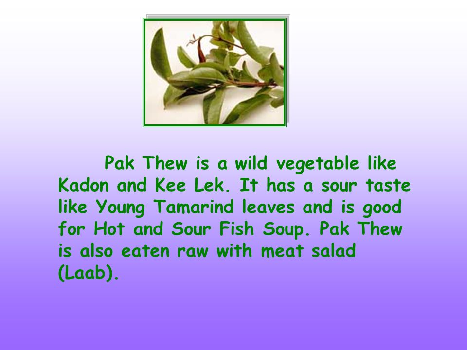 Pak Thew is a wild vegetable like Kadon and Kee Lek. It has a sour taste like Young Tamarind leaves and is good for Hot and Sour Fish Soup. Pak Thew i