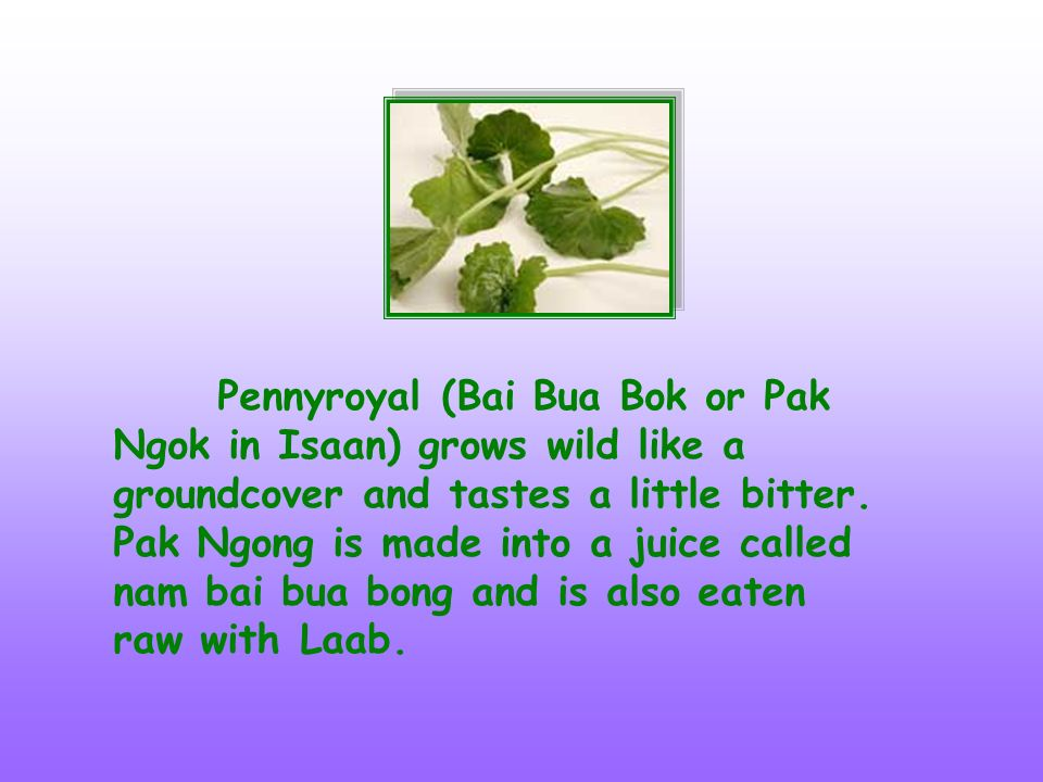 Pennyroyal (Bai Bua Bok or Pak Ngok in Isaan) grows wild like a groundcover and tastes a little bitter. Pak Ngong is made into a juice called nam bai