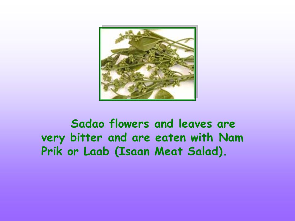 Sadao flowers and leaves are very bitter and are eaten with Nam Prik or Laab (Isaan Meat Salad).