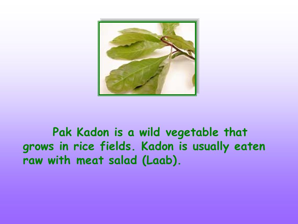 Samek leaves are very sour and are eaten with Laab or Nam Prik.