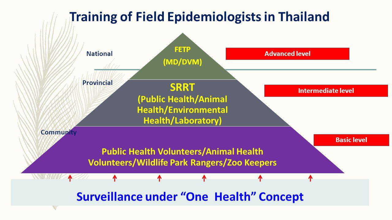 Training of Field Epidemiologists in Thailand FETP (MD/DVM) SRRT (Public Health/Animal Health/Environmental Health/Laboratory) Public Health Volunteer