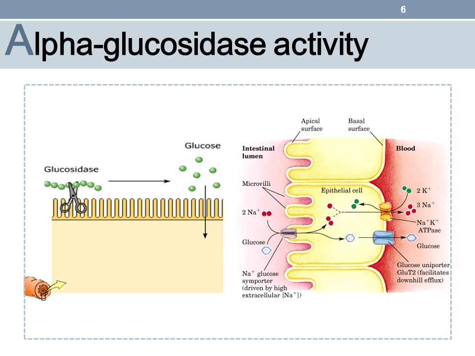 7 A lpha-glucosidase inhibitors drugs