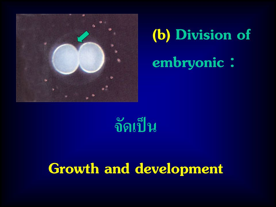 (b) Division of embryonic : จัดเป็น Growth and development