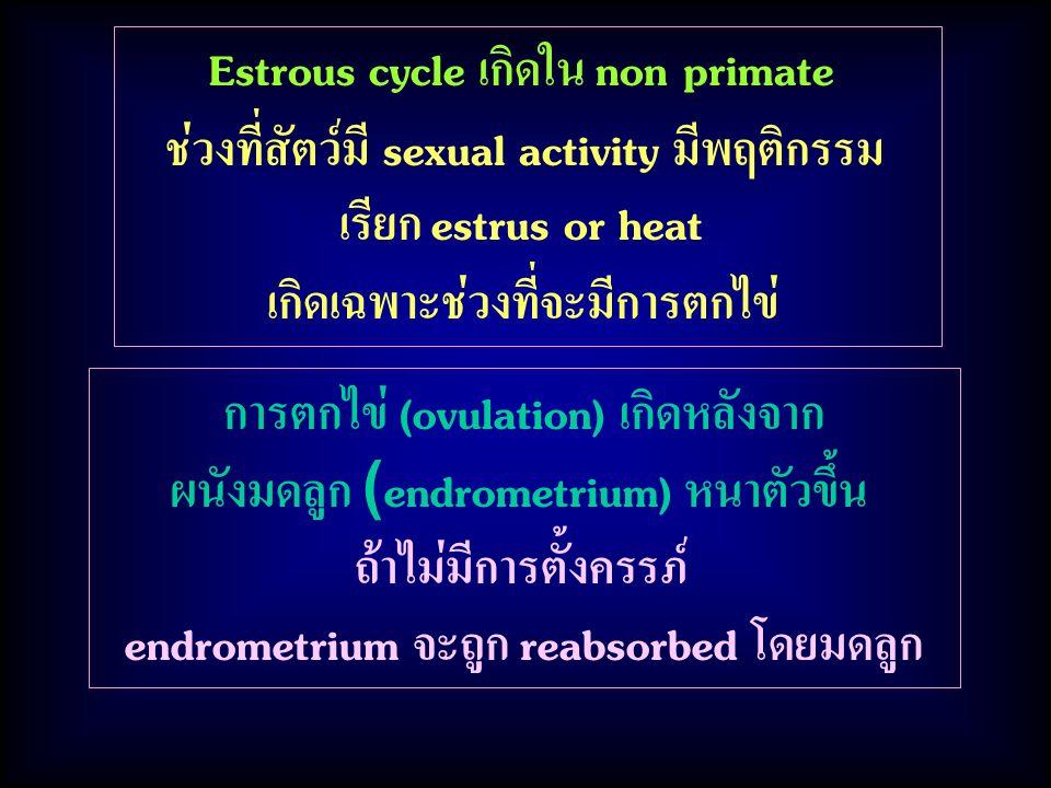 การตกไข่ (ovulation) เกิดหลังจาก ผนังมดลูก (endrometrium) หนาตัวขึ้น ถ้าไม่มีการตั้งครรภ์ endrometrium จะถูก reabsorbed โดยมดลูก Estrous cycle เกิดใน