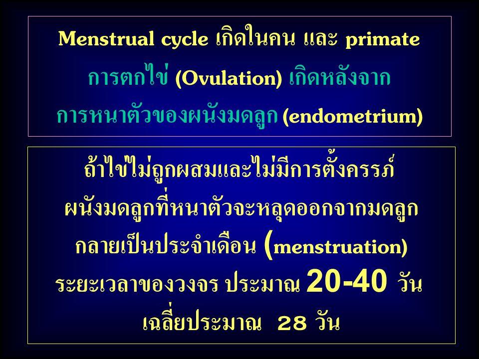ถ้าไข่ไม่ถูกผสมและไม่มีการตั้งครรภ์ ผนังมดลูกที่หนาตัวจะหลุดออกจากมดลูก กลายเป็นประจำเดือน (menstruation) ระยะเวลาของวงจร ประมาณ 20-40 วัน เฉลี่ยประมา