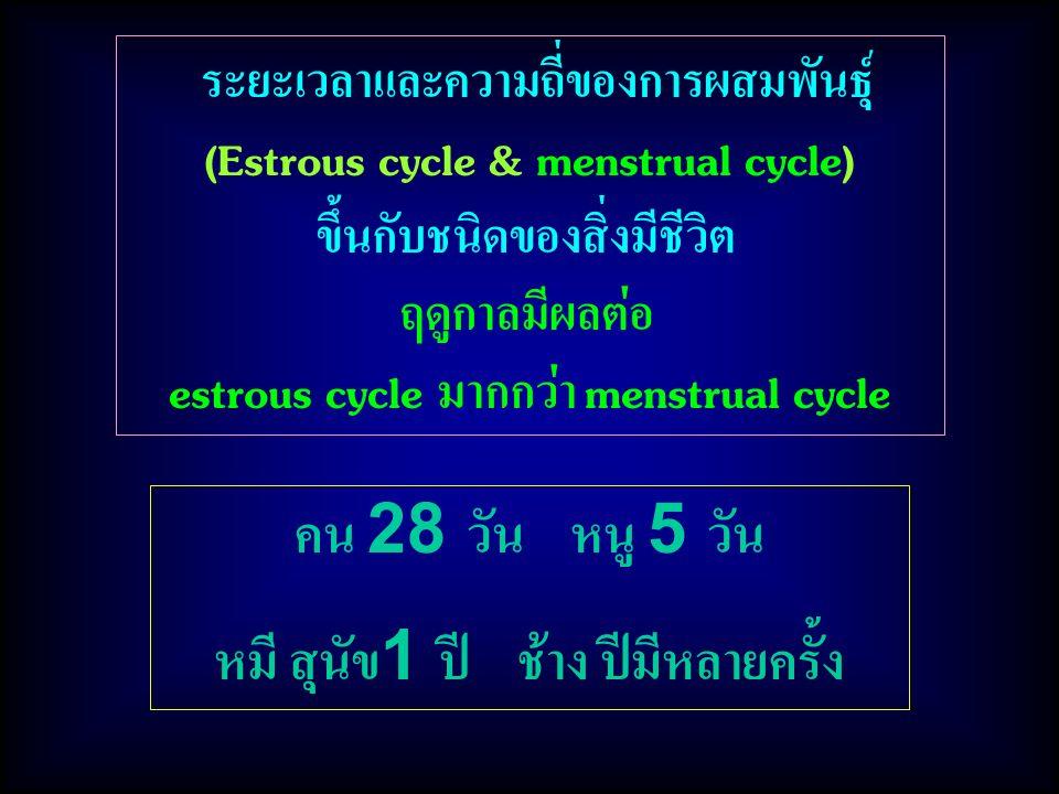 ระยะเวลาและความถี่ของการผสมพันธุ์ (Estrous cycle & menstrual cycle) ขึ้นกับชนิดของสิ่งมีชีวิต ฤดูกาลมีผลต่อ estrous cycle มากกว่า menstrual cycle คน 28 วัน หนู 5 วัน หมี สุนัข1 ปี ช้าง ปีมีหลายครั้ง