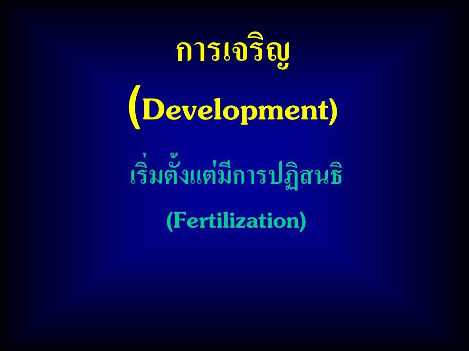การเจริญ (Development) เริ่มตั้งแต่มีการปฏิสนธิ (Fertilization)