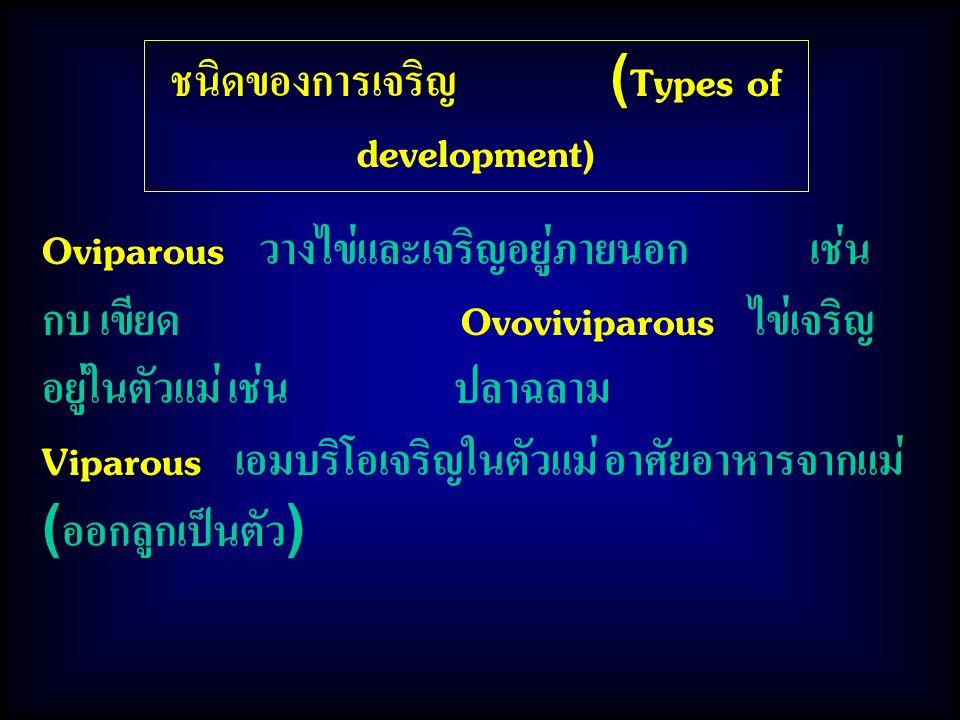 ชนิดของการเจริญ (Types of development) Oviparous วางไข่และเจริญอยู่ภายนอก เช่น กบ เขียด Ovoviviparous ไข่เจริญ อยู่ในตัวแม่ เช่น ปลาฉลาม Viparous เอมบริโอเจริญในตัวแม่ อาศัยอาหารจากแม่ (ออกลูกเป็นตัว)