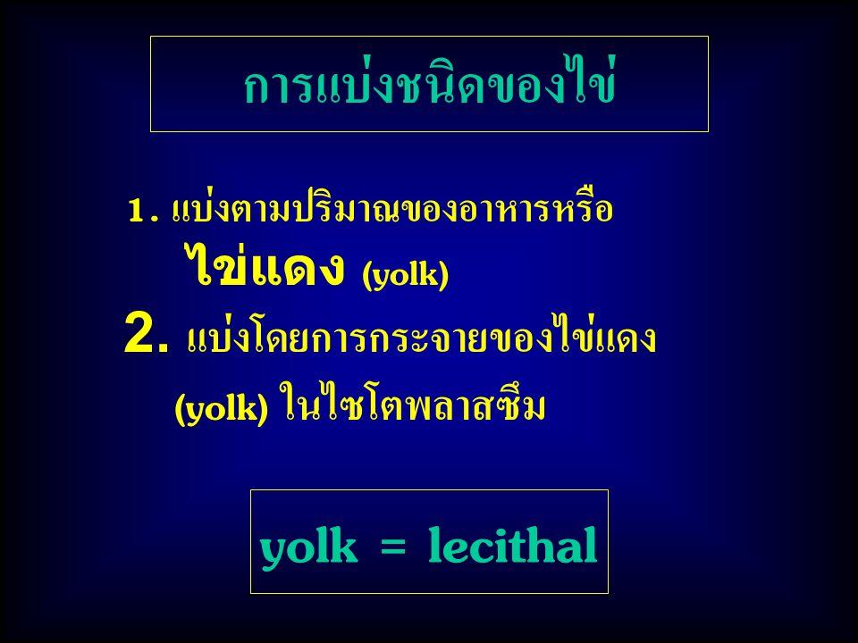 การแบ่งชนิดของไข่ 1. แบ่งตามปริมาณของอาหารหรือ ไข่แดง (yolk) 2. แบ่งโดยการกระจายของไข่แดง (yolk) ในไซโตพลาสซึม yolk = lecithal