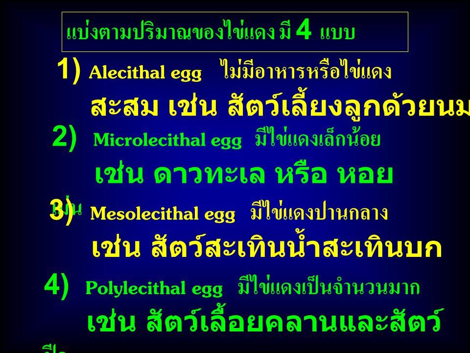 4) Polylecithal egg มีไข่แดงเป็นจำนวนมาก เช่น สัตว์เลื้อยคลานและสัตว์ ปีก แบ่งตามปริมาณของไข่แดง มี 4 แบบ 2) Microlecithal egg มีไข่แดงเล็กน้อย เช่น ดาวทะเล หรือ หอย เม่น 1) Alecithal egg ไม่มีอาหารหรือไข่แดง สะสม เช่น สัตว์เลี้ยงลูกด้วยนม 3) Mesolecithal egg มีไข่แดงปานกลาง เช่น สัตว์สะเทินน้ำสะเทินบก