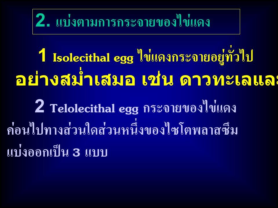 1 Isolecithal egg ไข่แดงกระจายอยู่ทั่วไป อย่างสม่ำเสมอ เช่น ดาวทะเลและหอยเม่น 2.
