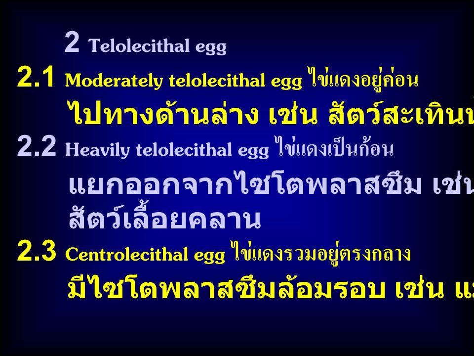2 Telolecithal egg 2.1 Moderately telolecithal egg ไข่แดงอยู่ค่อน ไปทางด้านล่าง เช่น สัตว์สะเทินน้ำสะเทินบก 2.2 Heavily telolecithal egg ไข่แดงเป็นก้อน แยกออกจากไซโตพลาสซึม เช่น สัตว์ปีก สัตว์เลื้อยคลาน 2.3 Centrolecithal egg ไข่แดงรวมอยู่ตรงกลาง มีไซโตพลาสซึมล้อมรอบ เช่น แมลง