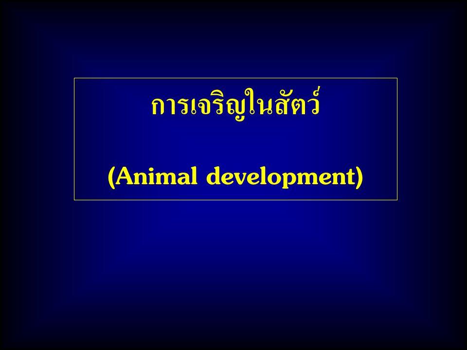 การเจริญในสัตว์ (Animal development)