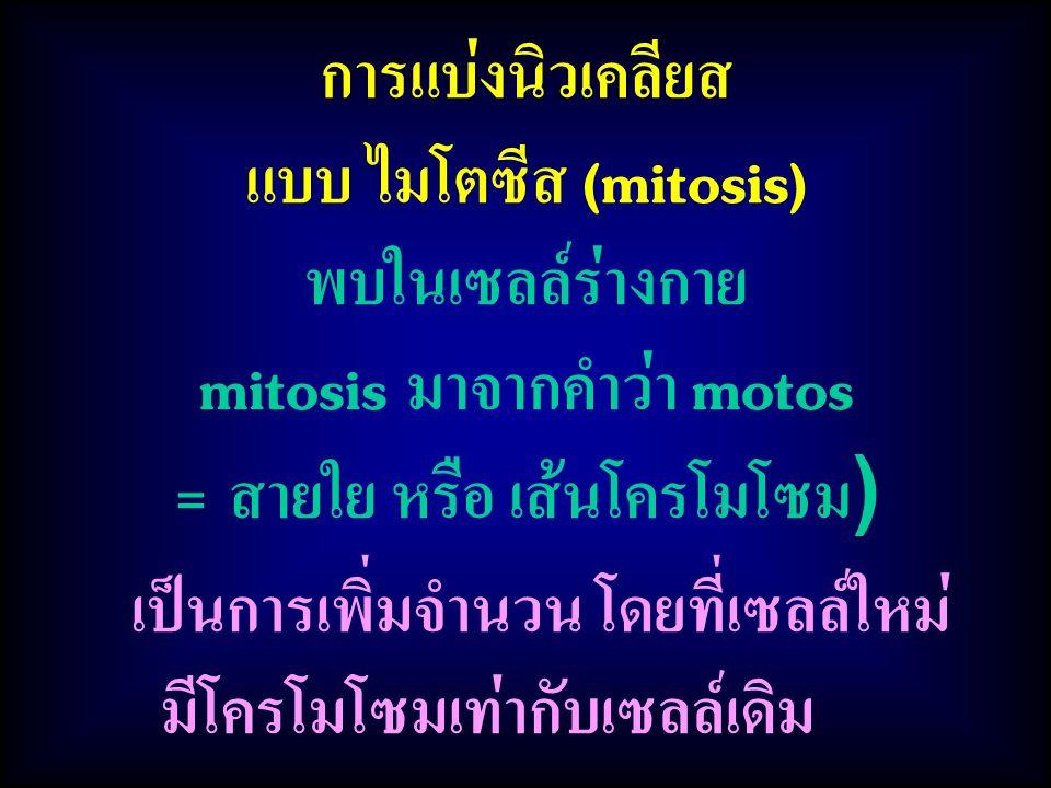 เป็นการเพิ่มจำนวน โดยที่เซลล์ใหม่ มีโครโมโซมเท่ากับเซลล์เดิม การแบ่งนิวเคลียส แบบ ไมโตซีส (mitosis) พบในเซลล์ร่างกาย mitosis มาจากคำว่า motos = สายใย หรือ เส้นโครโมโซม )