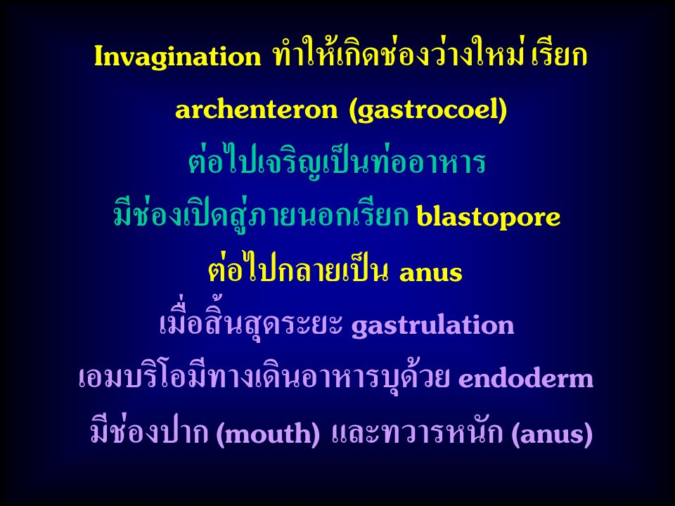 Invagination ทำให้เกิดช่องว่างใหม่ เรียก archenteron (gastrocoel) ต่อไปเจริญเป็นท่ออาหาร มีช่องเปิดสู่ภายนอกเรียก blastopore ต่อไปกลายเป็น anus เมื่อสิ้นสุดระยะ gastrulation เอมบริโอมีทางเดินอาหารบุด้วย endoderm มีช่องปาก (mouth) และทวารหนัก (anus)