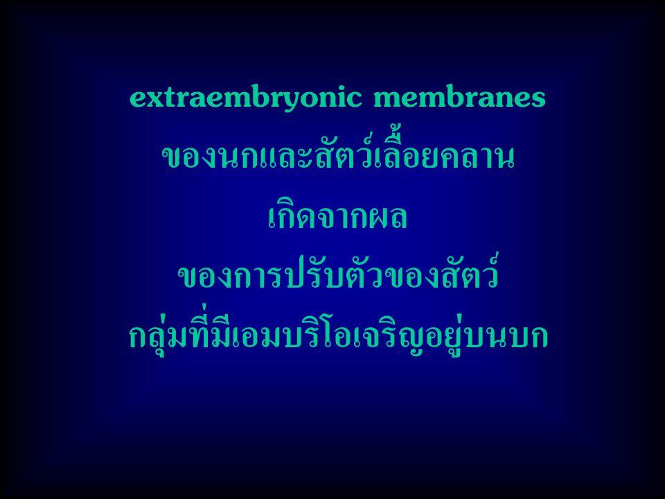 extraembryonic membranes ของนกและสัตว์เลื้อยคลาน เกิดจากผล ของการปรับตัวของสัตว์ กลุ่มที่มีเอมบริโอเจริญอยู่บนบก