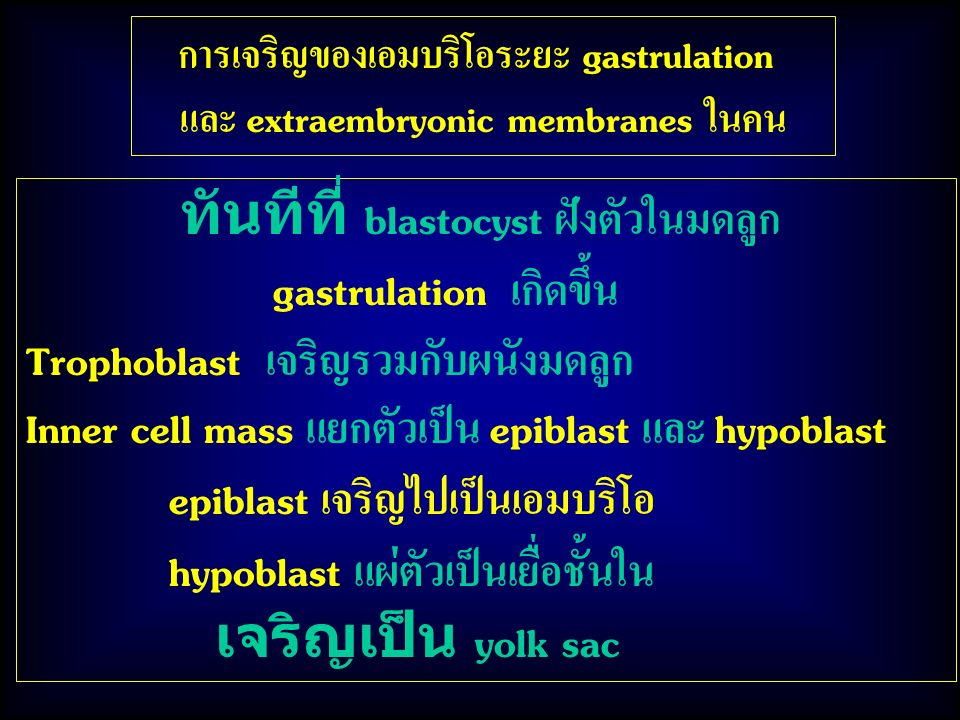 การเจริญของเอมบริโอระยะ gastrulation และ extraembryonic membranes ในคน ทันทีที่ blastocyst ฝังตัวในมดลูก gastrulation เกิดขึ้น Trophoblast เจริญรวมกับผนังมดลูก Inner cell mass แยกตัวเป็น epiblast และ hypoblast epiblast เจริญไปเป็นเอมบริโอ hypoblast แผ่ตัวเป็นเยื่อชั้นใน เจริญเป็น yolk sac