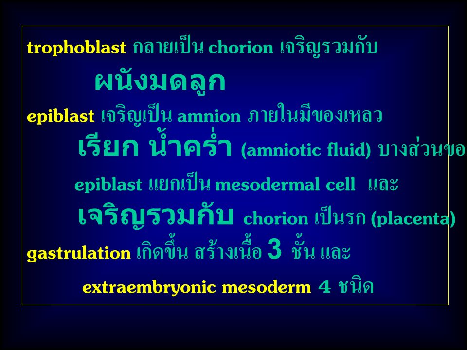 trophoblast กลายเป็น chorion เจริญรวมกับ ผนังมดลูก epiblast เจริญเป็น amnion ภายในมีของเหลว เรียก น้ำคร่ำ (amniotic fluid) บางส่วนของ epiblast แยกเป็น mesodermal cell และ เจริญรวมกับ chorion เป็นรก (placenta) gastrulation เกิดขึ้น สร้างเนื้อ 3 ชั้น และ extraembryonic mesoderm 4 ชนิด