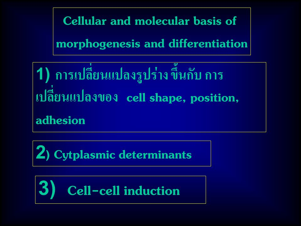 Cellular and molecular basis of morphogenesis and differentiation 1) การเปลี่ยนแปลงรูปร่าง ขึ้นกับ การ เปลี่ยนแปลงของ cell shape, position, adhesion 2