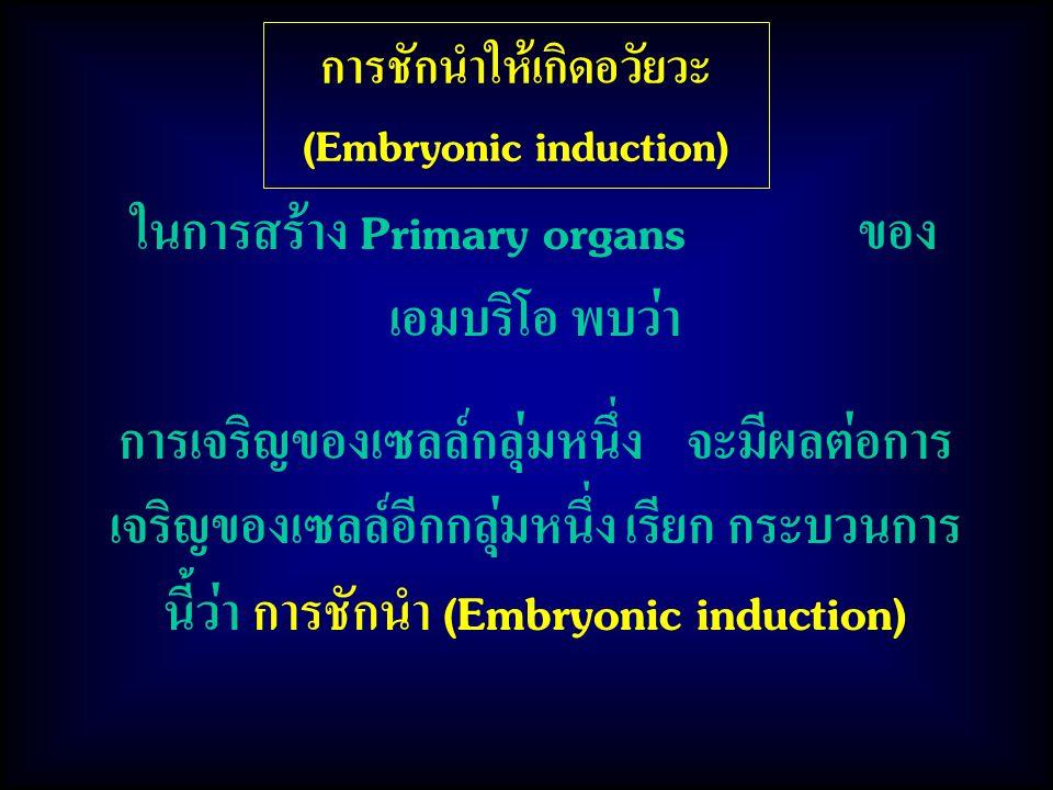 การชักนำให้เกิดอวัยวะ (Embryonic induction) ในการสร้าง Primary organs ของ เอมบริโอ พบว่า การเจริญของเซลล์กลุ่มหนึ่ง จะมีผลต่อการ เจริญของเซลล์อีกกลุ่มหนึ่ง เรียก กระบวนการ นี้ว่า การชักนำ (Embryonic induction)