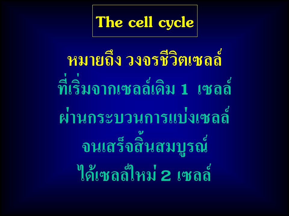 The cell cycle 2. Mitotic phase (M phase) ประกอบด้วย 1. Interphase G 1, S, G 2