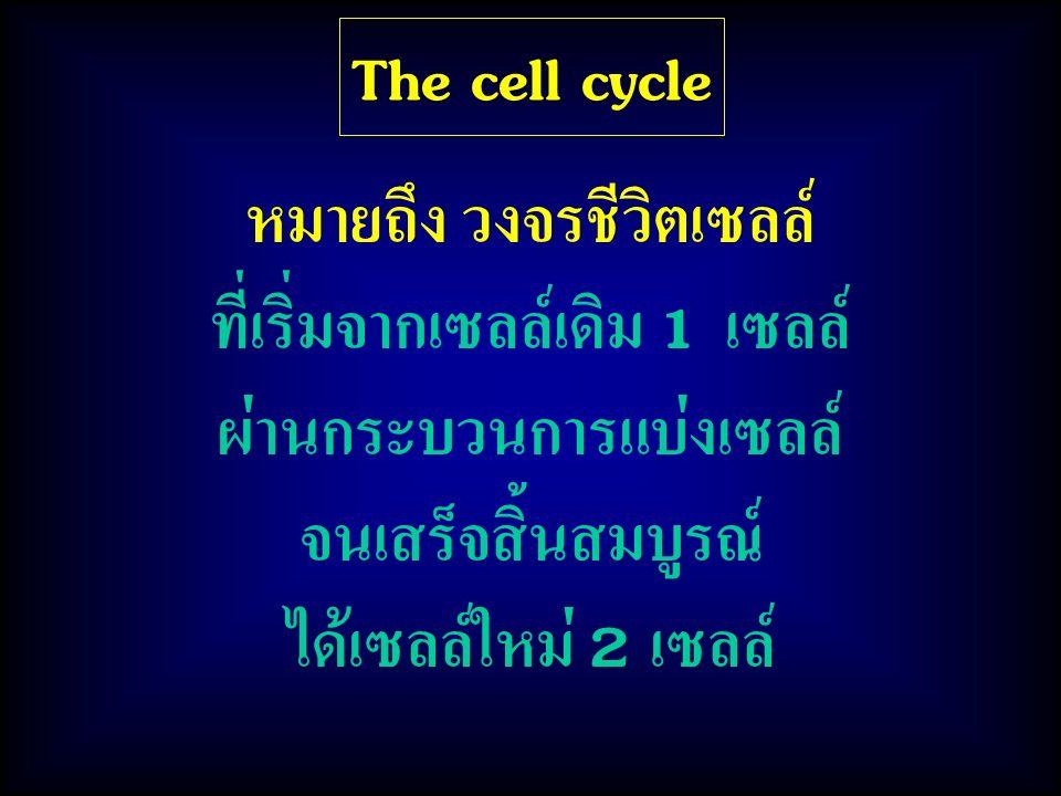 The cell cycle หมายถึง วงจรชีวิตเซลล์ ที่เริ่มจากเซลล์เดิม 1 เซลล์ ผ่านกระบวนการแบ่งเซลล์ จนเสร็จสิ้นสมบูรณ์ ได้เซลล์ใหม่ 2 เซลล์