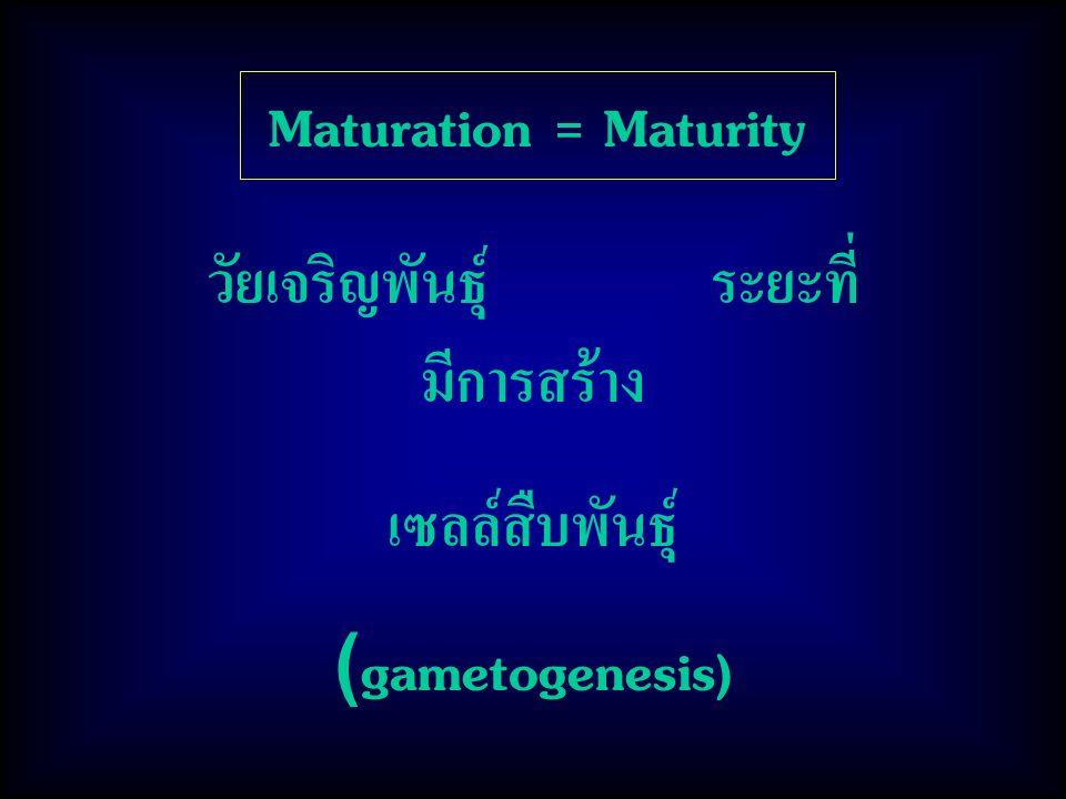 Maturation = Maturity วัยเจริญพันธุ์ ระยะที่ มีการสร้าง เซลล์สืบพันธุ์ (gametogenesis)