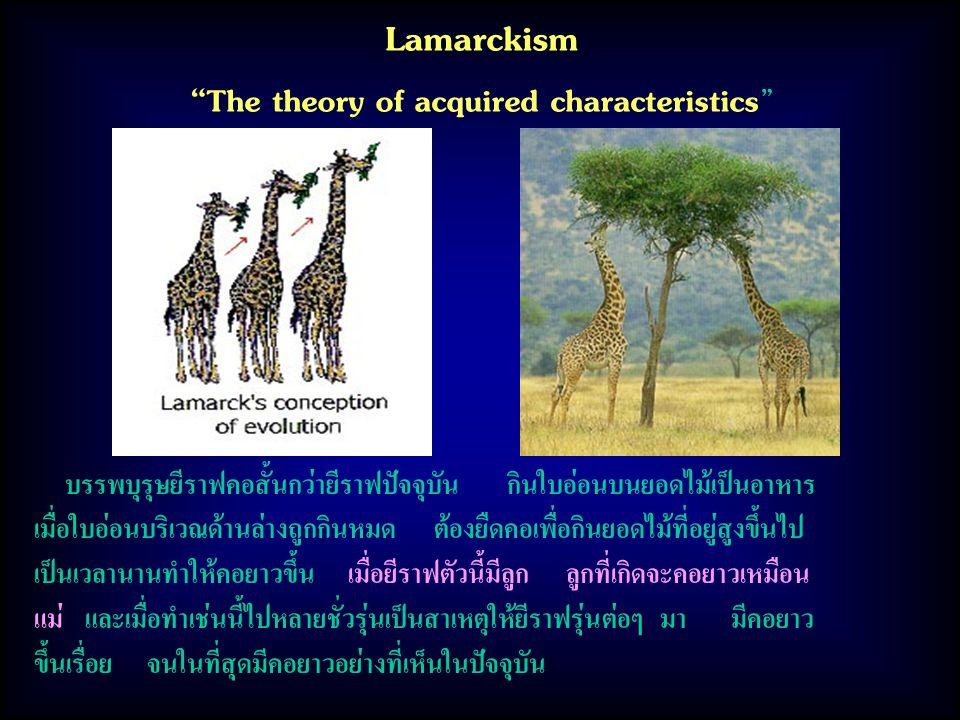 Lamarckism The theory of acquired characteristics บรรพบุรุษยีราฟคอสั้นกว่ายีราฟปัจจุบัน กินใบอ่อนบนยอดไม้เป็นอาหาร เมื่อใบอ่อนบริเวณด้านล่างถูกกินหมด ต้องยืดคอเพื่อกินยอดไม้ที่อยู่สูงขึ้นไป เป็นเวลานานทำให้คอยาวขึ้น เมื่อยีราฟตัวนี้มีลูก ลูกที่เกิดจะคอยาวเหมือน แม่ และเมื่อทำเช่นนี้ไปหลายชั่วรุ่นเป็นสาเหตุให้ยีราฟรุ่นต่อๆ มา มีคอยาว ขึ้นเรื่อย จนในที่สุดมีคอยาวอย่างที่เห็นในปัจจุบัน