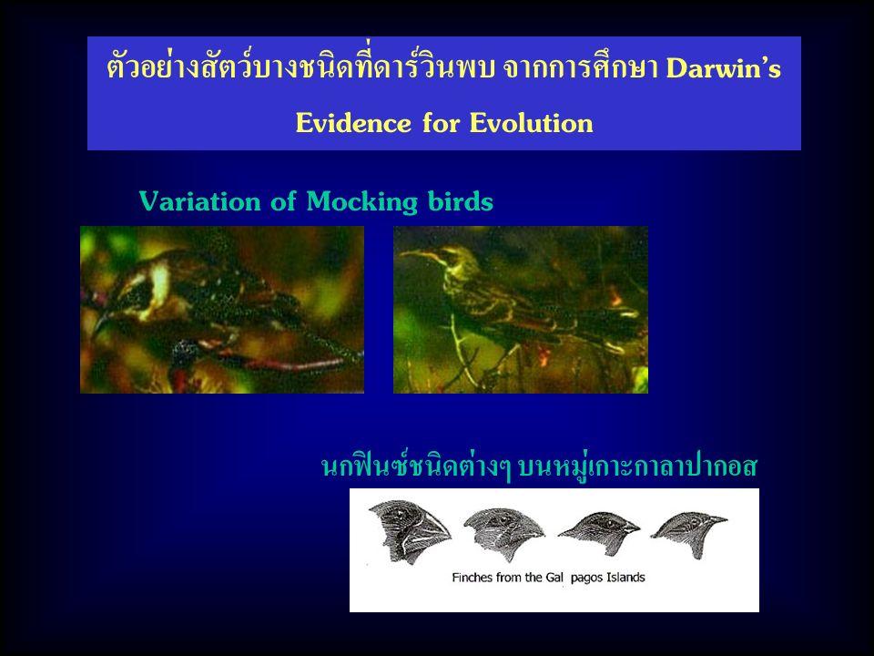นกฟินซ์ชนิดต่างๆ บนหมู่เกาะกาลาปากอส Variation of Mocking birds ตัวอย่างสัตว์บางชนิดที่ดาร์วินพบ จากการศึกษา Darwin's Evidence for Evolution