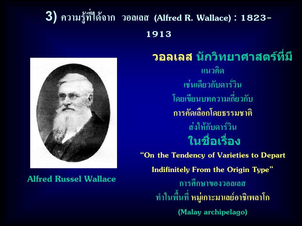 3) ความรู้ที่ได้จาก วอลเลส (Alfred R. Wallace) : 1823- 1913 วอลเลส นักวิทยาศาสตร์ที่มี แนวคิด เช่นเดียวกับดาร์วิน โดยเขียนบทความเกี่ยวกับ การคัดเลือกโ