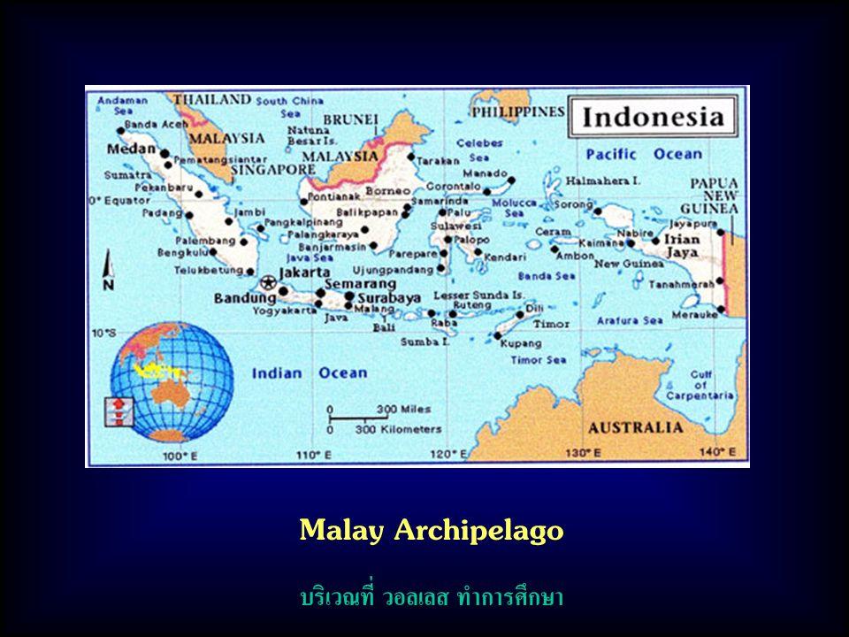Malay Archipelago บริเวณที่ วอลเลส ทำการศึกษา
