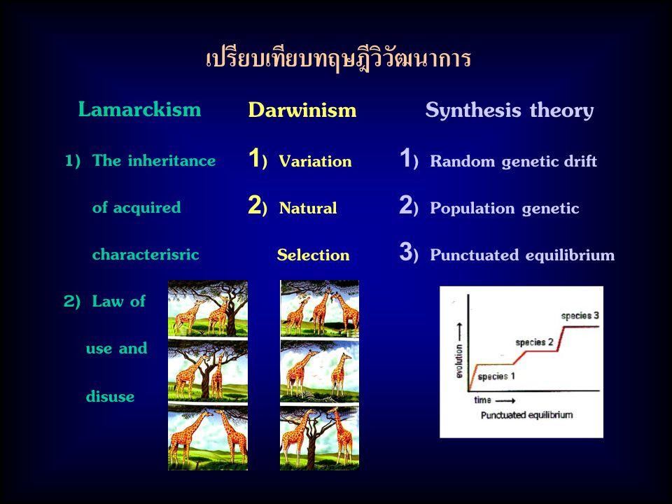 เปรียบเทียบทฤษฎีวิวัฒนาการ Lamarckism 1) The inheritance of acquired characterisric 2) Law of use and disuse Darwinism 1) Variation 2) Natural Selection Synthesis theory 1) Random genetic drift 2) Population genetic 3) Punctuated equilibrium