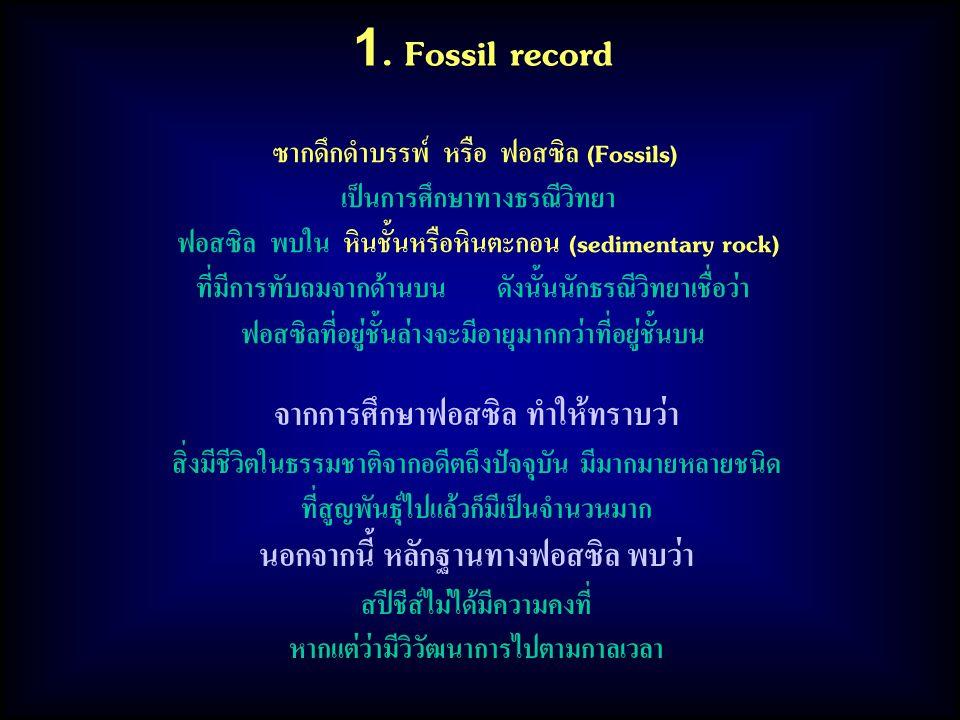 1. Fossil record ซากดึกดำบรรพ์ หรือ ฟอสซิล (Fossils) เป็นการศึกษาทางธรณีวิทยา ฟอสซิล พบใน หินชั้นหรือหินตะกอน (sedimentary rock) ที่มีการทับถมจากด้านบ