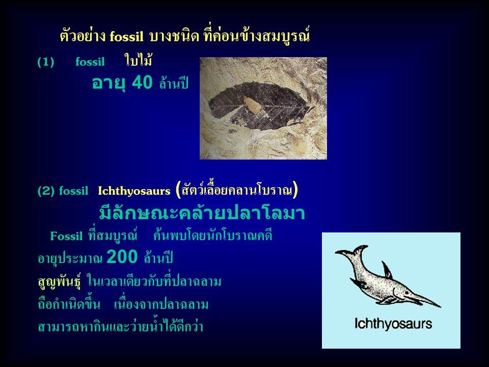 (2) fossil Ichthyosaurs (สัตว์เลื้อยคลานโบราณ) มีลักษณะคล้ายปลาโลมา Fossil ที่สมบูรณ์ ค้นพบโดยนักโบราณคดี อายุประมาณ 200 ล้านปี สูญพันธุ์ ในเวลาเดียวกับที่ปลาฉลาม ถือกำเนิดขึ้น เนื่องจากปลาฉลาม สามารถหากินและว่ายน้ำได้ดีกว่า ตัวอย่าง fossil บางชนิด ที่ค่อนข้างสมบูรณ์ (1) fossil ใบไม้ อายุ 40 ล้านปี