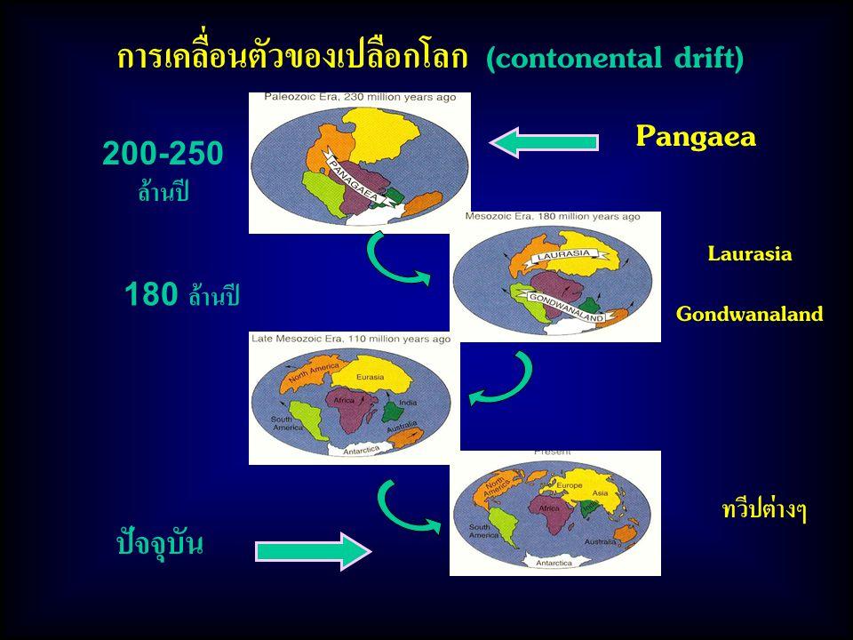 การเคลื่อนตัวของเปลือกโลก (contonental drift) Pangaea ปัจจุบัน 200-250 ล้านปี 180 ล้านปี Laurasia Gondwanaland ทวีปต่างๆ