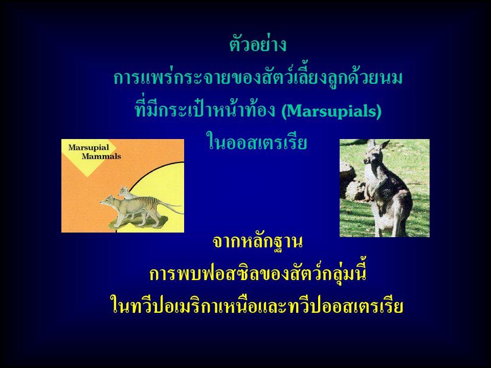 ตัวอย่าง การแพร่กระจายของสัตว์เลี้ยงลูกด้วยนม ที่มีกระเป๋าหน้าท้อง (Marsupials) ในออสเตรเรีย จากหลักฐาน การพบฟอสซิลของสัตว์กลุ่มนี้ ในทวีปอเมริกาเหนือและทวีปออสเตรเรีย