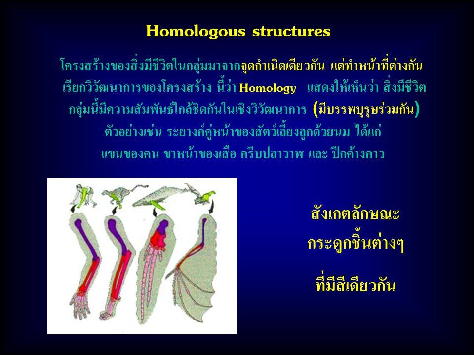 Homologous structures โครงสร้างของสิ่งมีชีวิตในกลุ่มมาจากจุดกำเนิดเดียวกัน แต่ทำหน้าที่ต่างกัน เรียกวิวัฒนาการของโครงสร้าง นี้ว่า Homology แสดงให้เห็นว่า สิ่งมีชีวิต กลุ่มนี้มีความสัมพันธ์ใกล้ชิดกันในเชิงวิวัฒนาการ (มีบรรพบุรุษร่วมกัน) ตัวอย่างเช่น ระยางค์คู่หน้าของสัตว์เลี้ยงลูกด้วยนม ได้แก่ แขนของคน ขาหน้าของเสือ ครีบปลาวาฬ และ ปีกค้างคาว สังเกตลักษณะ กระดูกชิ้นต่างๆ ที่มีสีเดียวกัน