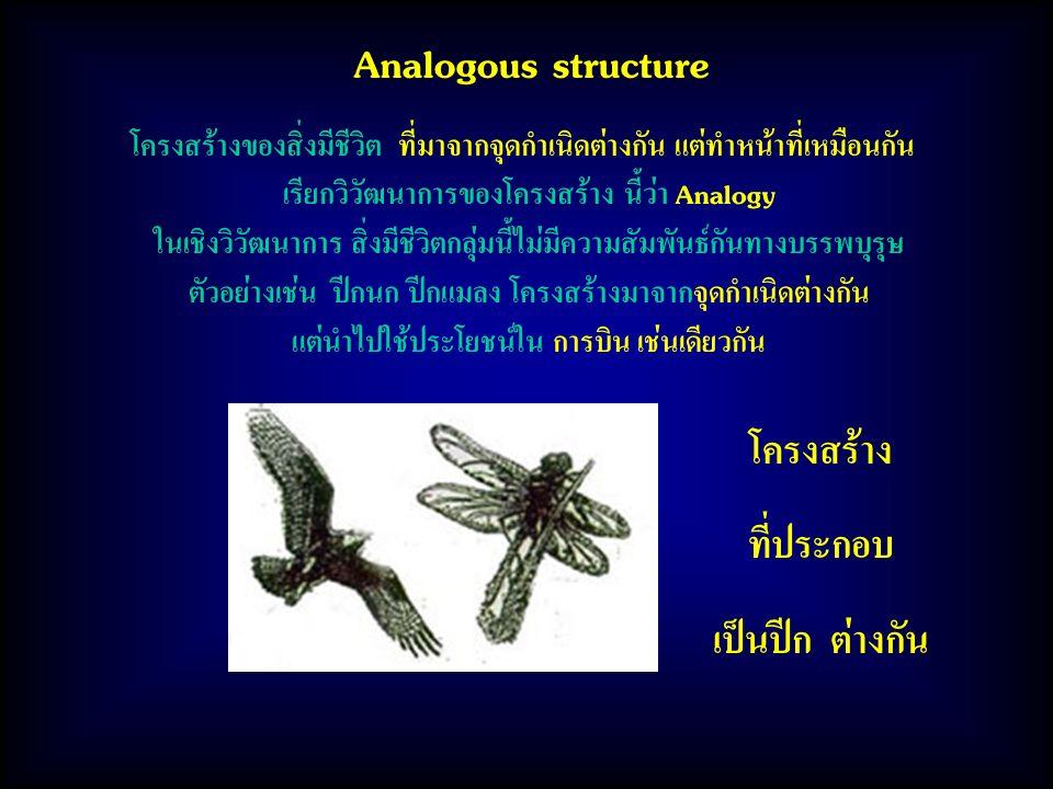 Analogous structure โครงสร้างของสิ่งมีชีวิต ที่มาจากจุดกำเนิดต่างกัน แต่ทำหน้าที่เหมือนกัน เรียกวิวัฒนาการของโครงสร้าง นี้ว่า Analogy ในเชิงวิวัฒนาการ สิ่งมีชีวิตกลุ่มนี้ไม่มีความสัมพันธ์กันทางบรรพบุรุษ ตัวอย่างเช่น ปีกนก ปีกแมลง โครงสร้างมาจากจุดกำเนิดต่างกัน แต่นำไปใช้ประโยชน์ใน การบิน เช่นเดียวกัน โครงสร้าง ที่ประกอบ เป็นปีก ต่างกัน