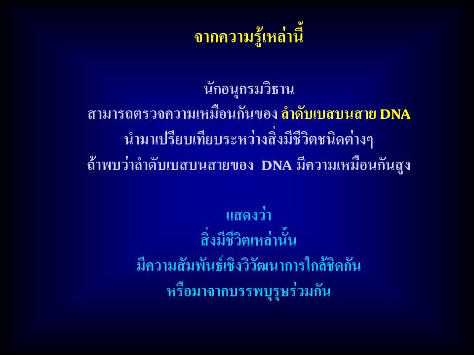 จากความรู้เหล่านี้ นักอนุกรมวิธาน สามารถตรวจความเหมือนกันของ ลำดับเบสบนสาย DNA นำมาเปรียบเทียบระหว่างสิ่งมีชีวิตชนิดต่างๆ ถ้าพบว่าลำดับเบสบนสายของ DNA มีความเหมือนกันสูง แสดงว่า สิ่งมีชีวิตเหล่านั้น มีความสัมพันธ์เชิงวิวัฒนาการใกล้ชิดกัน หรือมาจากบรรพบุรุษร่วมกัน