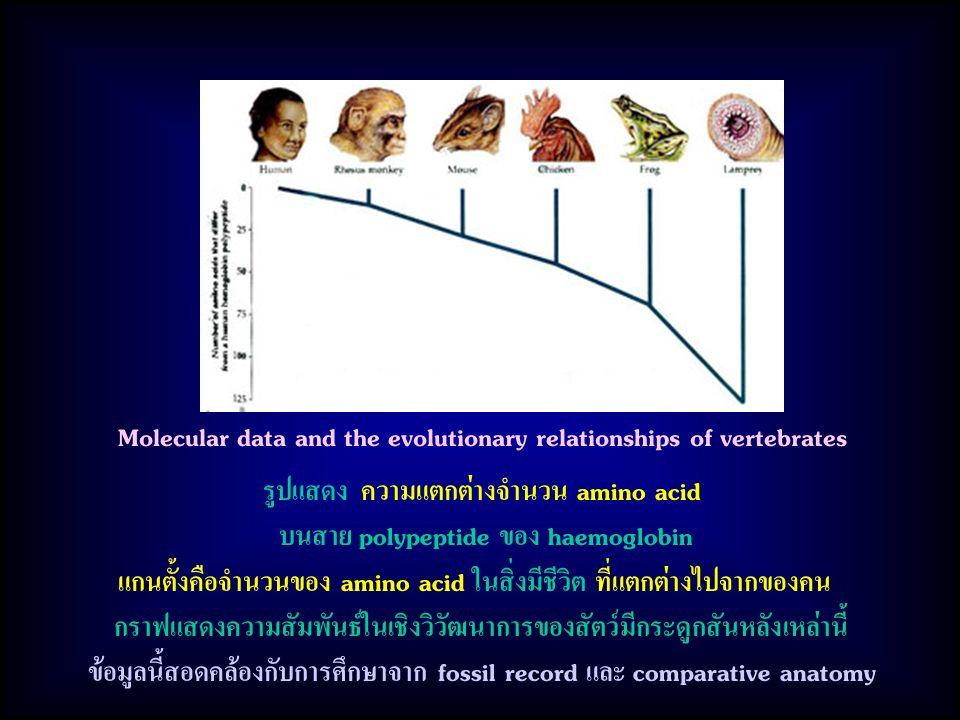 รูปแสดง ความแตกต่างจำนวน amino acid บนสาย polypeptide ของ haemoglobin แกนตั้งคือจำนวนของ amino acid ในสิ่งมีชีวิต ที่แตกต่างไปจากของคน กราฟแสดงความสัมพันธ์ในเชิงวิวัฒนาการของสัตว์มีกระดูกสันหลังเหล่านี้ ข้อมูลนี้สอดคล้องกับการศึกษาจาก fossil record และ comparative anatomy Molecular data and the evolutionary relationships of vertebrates