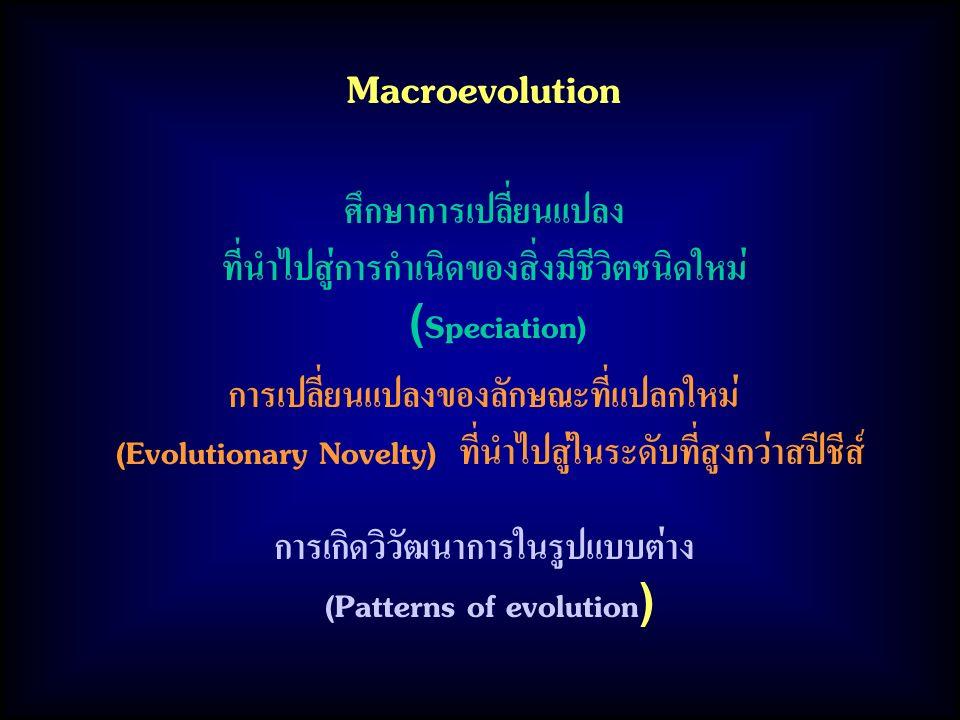 Macroevolution ศึกษาการเปลี่ยนแปลง ที่นำไปสู่การกำเนิดของสิ่งมีชีวิตชนิดใหม่ (Speciation) การเกิดวิวัฒนาการในรูปแบบต่าง (Patterns of evolution) การเปลี่ยนแปลงของลักษณะที่แปลกใหม่ (Evolutionary Novelty) ที่นำไปสู่ในระดับที่สูงกว่าสปีชีส์