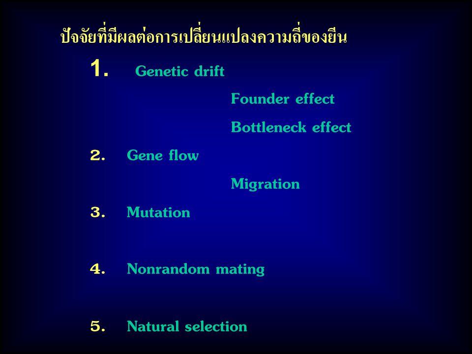 ปัจจัยที่มีผลต่อการเปลี่ยนแปลงความถี่ของยีน 1. Genetic drift Founder effect Bottleneck effect 2. Gene flow Migration 3. Mutation 4. Nonrandom mating 5