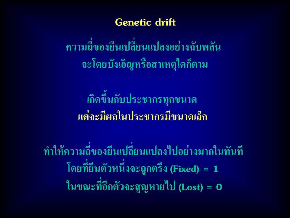 Genetic drift ความถี่ของยีนเปลี่ยนแปลงอย่างฉับพลัน จะโดยบังเอิญหรือสาเหตุใดก็ตาม เกิดขึ้นกับประชากรทุกขนาด แต่จะมีผลในประชากรมีขนาดเล็ก ทำให้ความถี่ของยีนเปลี่ยนแปลงไปอย่างมากในทันที โดยที่ยีนตัวหนึ่งจะถูกตรึง (Fixed) = 1 ในขณะที่อีกตัวจะสูญหายไป (Lost) = 0