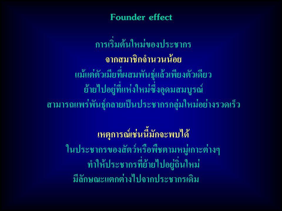 Founder effect การเริ่มต้นใหม่ของประชากร จากสมาชิกจำนวนน้อย แม้แต่ตัวเมียที่ผสมพันธุ์แล้วเพียงตัวเดียว ย้ายไปอยู่ที่แห่งใหม่ซึ่งอุดมสมบูรณ์ สามารถแพร่