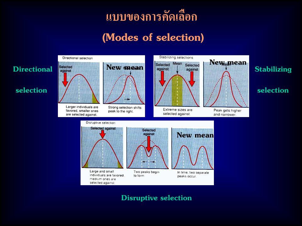 แบบของการคัดเลือก (Modes of selection) Directional selection Stabilizing selection Disruptive selection New mean