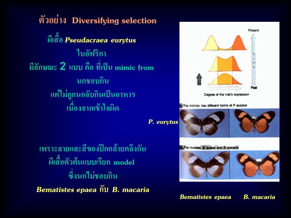 ตัวอย่าง Diversifying selection ผีเสื้อ Pseudacraea eurytus ในอัฟริกา มีลักษณะ 2 แบบ คือ ที่เป็น mimic from นกชอบกิน แต่ไม่กูกนกจับกินเป็นอาหาร เนื่องจากเข้าใจผิด เพราะลายและสีของปีกคล้ายคลึงกัน ผีเสื้อตัวต้นแบบเรียก model ซึ่งนกไม่ชอบกิน Bematistes epaea กับ B.