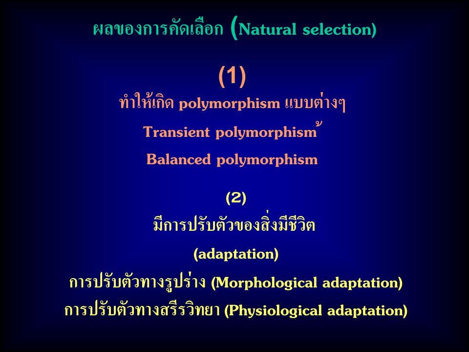 ผลของการคัดเลือก (Natural selection) (1) ทำให้เกิด polymorphism แบบต่างๆ Transient polymorphism ้ Balanced polymorphism (2) มีการปรับตัวของสิ่งมีชีวิต (adaptation) การปรับตัวทางรูปร่าง (Morphological adaptation) การปรับตัวทางสรีรวิทยา (Physiological adaptation)